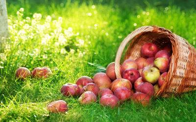 «Bis anhin wurde die Bioverfügbarkeit in der Ernährungslehre praktisch nicht berücksichtigt.»